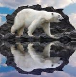 Polar bear. White polar bear on the cliff Stock Photography