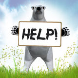 Polar Bear Asking For Help Stock Photography