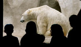 Polar Bear with audience. Royalty Free Stock Photos