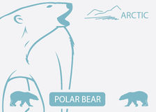 Polar bear background. Vector illustration of polar bear Royalty Free Illustration