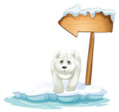 A polar bear below the wooden arrowboard Royalty Free Stock Photos