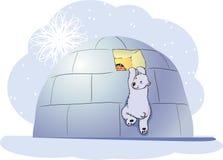 Polar bear and boy. The polar bear climbs in the house