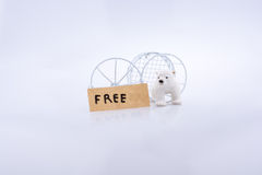 Polar bear cage open to freedom Royalty Free Stock Images
