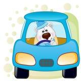 Polar Bear in a car Royalty Free Stock Photos
