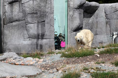 Polar bear cave. ZOO. Royalty Free Stock Images
