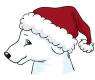 Polar bear with Christmas hat Royalty Free Stock Photography