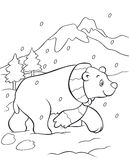 Polar bear coloring book Stock Photography