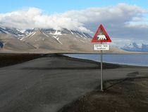 Polar bear crossing  Stock Photography