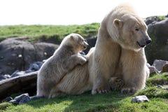Polar bear with cub Stock Photos