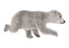 Polar Bear Cub Stock Photos