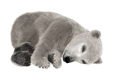 Polar Bear Cub Stock Photo