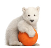 Polar bear cub, Ursus maritimus, 3 months old. Playing with orange ball against white background stock images