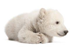 Polar bear cub, Ursus maritimus, 3 months old. Lying against white background stock photos