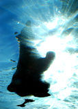 Polar Bear Dive in Water. An underwater view of a polar bear diving into a pond of water Stock Photography