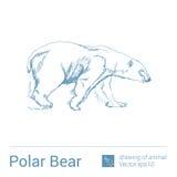 Polar bear, drawing of animals, vectore Stock Photography
