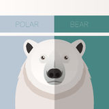 Polar Bear flat postcard Stock Photo