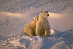 Polar bear with her cub. Polar bear and cub in low Arctic sunlight Stock Photo