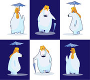 Polar bear, his cat and their umbrella stock images