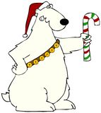 Polar bear holding a candy cane. This illustration depicts a polar bear wearing a Santa hat and sleigh bells holding a candy cane Royalty Free Stock Image