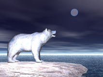 Polar Bear on Ice. Flow Royalty Free Stock Photo