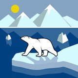 Polar bear on an ice floe, polar landscape. On the image is presented polar bear on an ice floe, polar landscape vector illustration