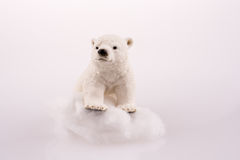 Polar bear on ice. On a white background Royalty Free Stock Photography