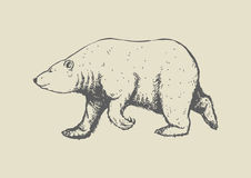 Polar bear. Illustration of polar bear walking pose Royalty Free Stock Photos