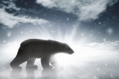 Polar Bear In A Snow Storm Stock Image