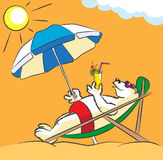 White bear on a beach. The polar bear lies in a chaise lounge under an umbrella on a beach Stock Photography