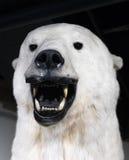 While polar bear Stock Image