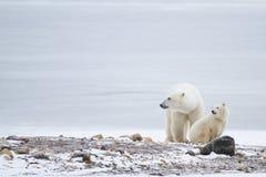Polar bear mom and cub looking left stock photo