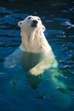 Polar bear. Nice photo of cute white polar bear stock photos