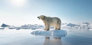 Free Polar Bear On Ice Floe. Melting Iceberg And Global Warming Stock Image - 193240311