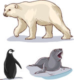Polar bear penguins and seals Royalty Free Stock Image