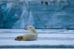 Polar bear rest royalty free stock photography