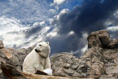 Polar Bear on Rocks Stock Photo