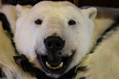 Polar Bear Rug Stock Photo