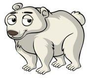 Polar bear with sad face Stock Image