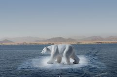 Polar bear on small iceberg. A polar bear on an small iceberg rounded by the desert, symbol of climate change or global warming Stock Images