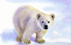 Polar bear in snow. Polar bear in the snow painted in watercolor Royalty Free Stock Image