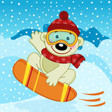 Polar bear on snowboard Royalty Free Stock Photography