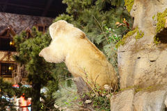A polar bear specimen Royalty Free Stock Photos