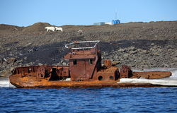 Polar bear survival in Arctic Royalty Free Stock Photos