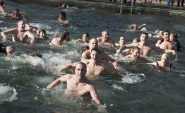 Polar Bear Swim royalty free stock image