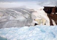 Polar bear on top of the iceberg. Polar bear in natural environment stock photography
