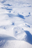 Polar Bear Track Stock Images