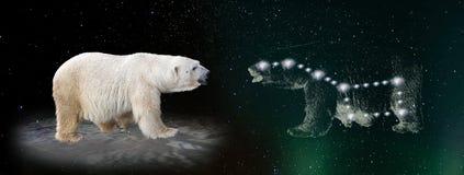 Polar bear and ursa major constellation