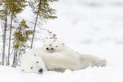 Polar bear Ursus maritimus with cubs Royalty Free Stock Image