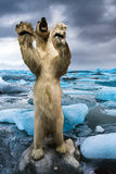Polar bear (Ursus maritimus). On his back legs growling at the camera in a icy landscape stock photo