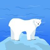 Polar Bear Ursus Maritimus on Piece of Ice Stock Photos